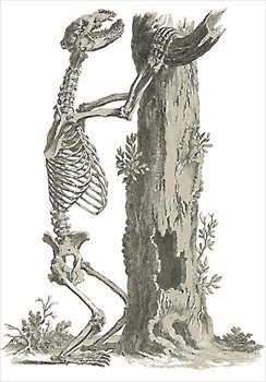 bear-skeleton