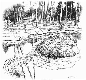 beaver-dam-coloring-page