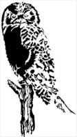 Owl-bold-graphic