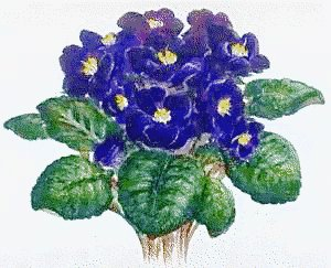 Free Africanviolet Clipart Free