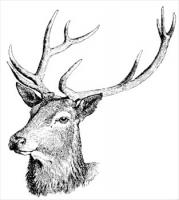 Red-deer-head