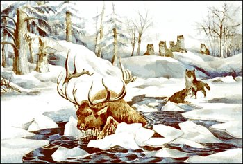moose-and-wolves