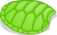 turtle-shell